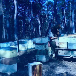 Beekeeping days gone by